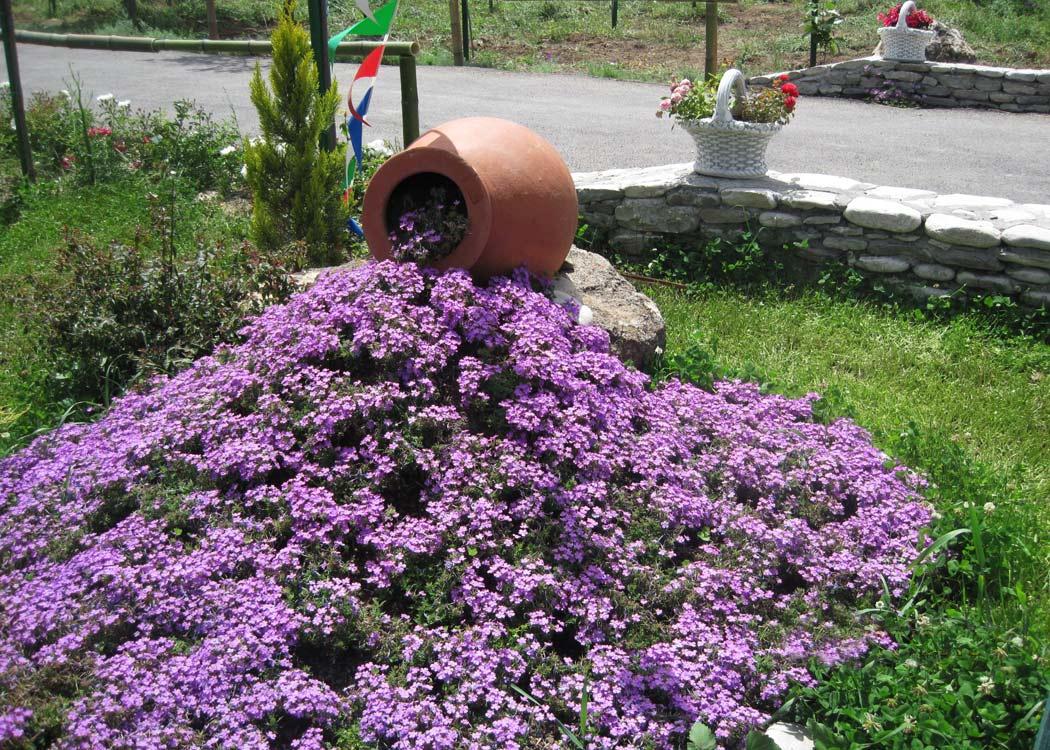 Ручей из цветков лобелии