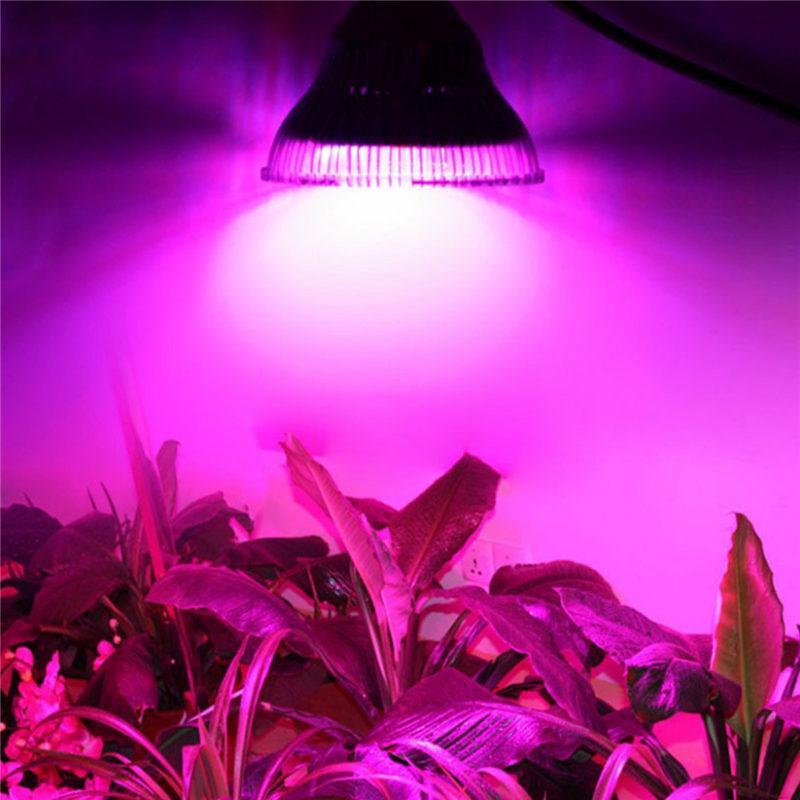 Глоксиния под лампой размножение зимой