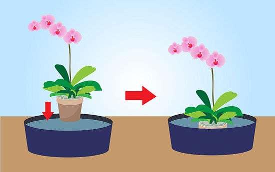 температурный режим для орхидеи