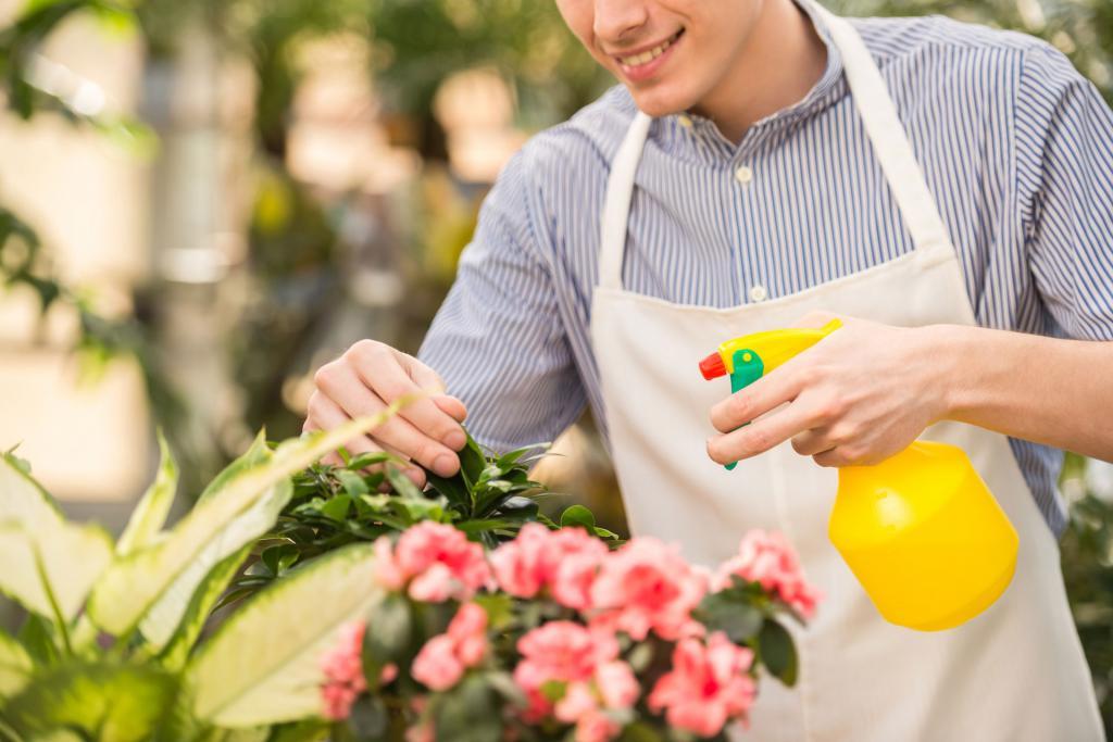 опрыскивание растения мирт