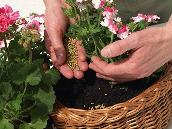 сроки внесения удобрения для комнатных растений